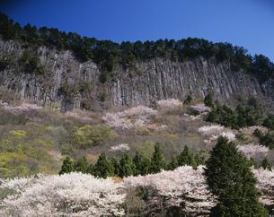奥香落渓 山桜と屏風岩の写真素材 [FYI03991718]