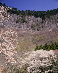 奥香落渓 山桜と屏風岩の写真素材 [FYI03991719]