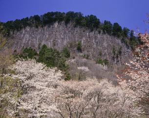 奥香落渓 山桜と屏風岩の写真素材 [FYI03991722]