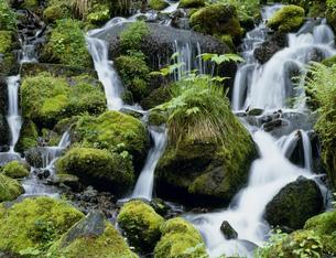 奥入瀬渓流の支流の写真素材 [FYI03991781]