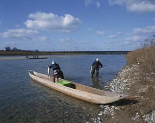 三面川さけの流し網漁の写真素材 [FYI03991789]
