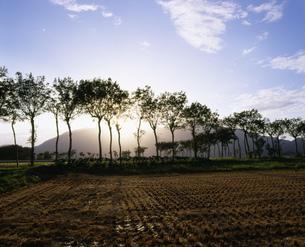 はざ木と弥彦山の写真素材 [FYI03991795]