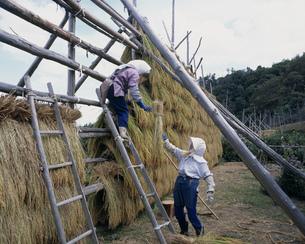 千枚田の稲干しの写真素材 [FYI03991797]