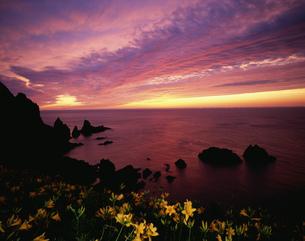 大野亀のカンゾウと夕日の写真素材 [FYI03991844]