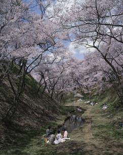 高遠城跡の花見の写真素材 [FYI03991960]
