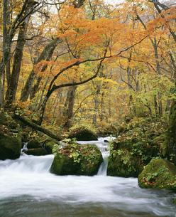 奥入瀬渓流の紅葉の写真素材 [FYI03991961]