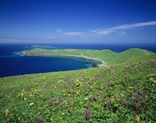 スコトン岬とトド島の写真素材 [FYI03992005]