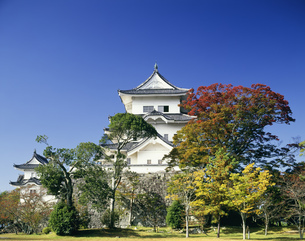 伊賀上野城と紅葉の写真素材 [FYI03992006]