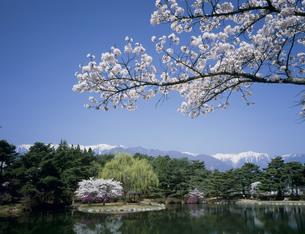 桜の咲く馬見塚公園と中央アルプスの写真素材 [FYI03992034]