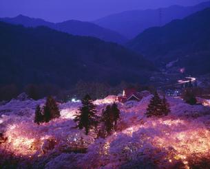 高遠城址公園の夜桜の写真素材 [FYI03992039]
