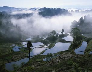 朝霧の蒲生の棚田の写真素材 [FYI03992049]