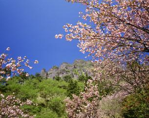 桜の里の八重桜と妙義山の写真素材 [FYI03992060]