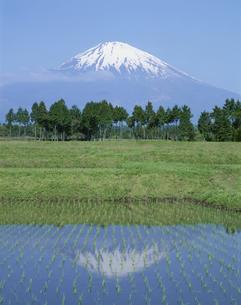 水田と富士山 5月  御殿場市 静岡県の写真素材 [FYI03992095]