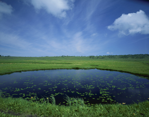 初夏の雨竜沼湿原 7月  北海道の写真素材 [FYI03992097]