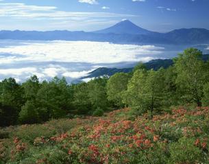甘利山からの富士山 6月  韮崎市 山梨県の写真素材 [FYI03992098]