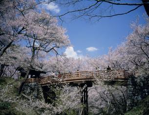 高遠城跡公園の桜の写真素材 [FYI03992964]