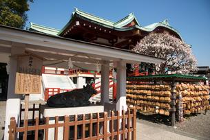 亀戸天神社神牛殿と本殿の写真素材 [FYI03993157]