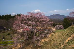 桜咲く山村風景の写真素材 [FYI03993266]