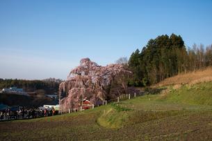三春滝桜の写真素材 [FYI03993319]