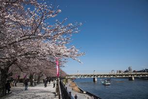 桜咲く墨田公園と隅田川の写真素材 [FYI03993417]