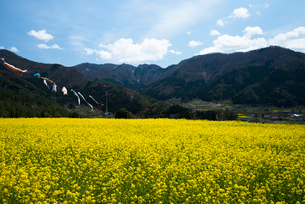 飯山菜の花公園の写真素材 [FYI03993418]
