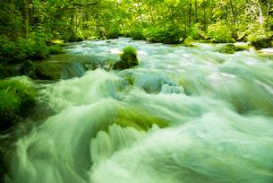 新緑の奥入瀬渓流の写真素材 [FYI03993656]