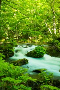 新緑の奥入瀬渓流の写真素材 [FYI03993659]