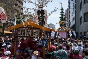 三社祭,本社神輿の写真素材 [FYI03993779]