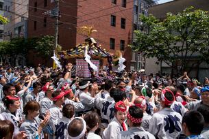 三社祭,本社神輿の写真素材 [FYI03993800]