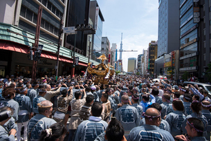 三社祭,浅草雷門通りの神輿の写真素材 [FYI03993834]