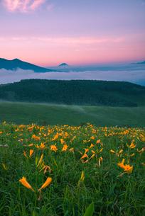 夜明けのニッコウキスゲ咲く霧ヶ峰高原富士見台より八ヶ岳連峰富士山の写真素材 [FYI03993938]