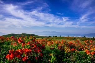 レンゲツツジ咲き誇る霧ヶ峰高原と南アルプス連峰の写真素材 [FYI03994000]