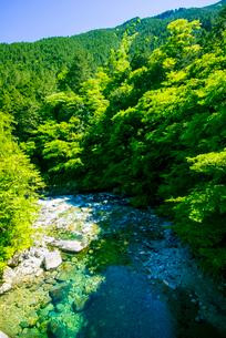 阿寺溪谷と木曽ヒノキ林の写真素材 [FYI03994014]