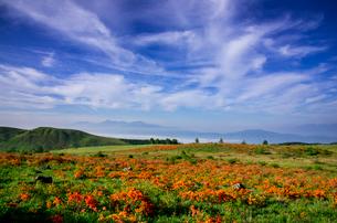 霧ヶ峰蛙原レンゲツツジ咲き誇る草原と南アルプス連峰の写真素材 [FYI03994084]