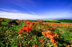 霧ヶ峰高原園地よりレンゲツツジ咲き誇る高原と南アルプス中央アルプスの写真素材 [FYI03994092]