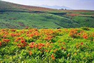 レンゲツツジ咲く草原と八ヶ岳連峰の写真素材 [FYI03994098]
