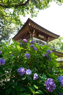 浄智寺の写真素材 [FYI03994142]