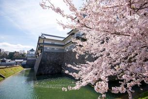 金沢城公園 桜と菱櫓の写真素材 [FYI03994175]