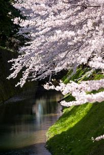 金沢城公園 内堀の桜並木の写真素材 [FYI03994178]