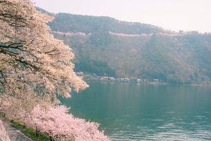奥琵琶湖湖畔の桜と葛籠尾半島の写真素材 [FYI03994264]