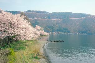 奥琵琶湖湖畔の桜と葛籠尾半島の写真素材 [FYI03994268]