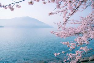 奥琵琶湖湖畔の桜と葛籠尾半島の写真素材 [FYI03994285]