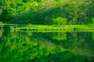戸隠の新緑映す鏡池の写真素材 [FYI03994518]