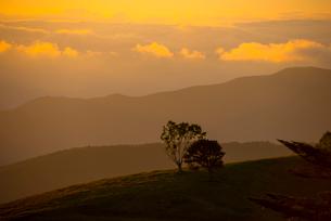 入笠高原より望む乗鞍岳穂高連峰方向夕焼けと雲海の写真素材 [FYI03994526]