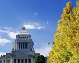 紅葉と国会議事堂の写真素材 [FYI03994633]