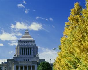 紅葉と国会議事堂の写真素材 [FYI03994635]