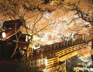 高遠城跡の夜桜の写真素材 [FYI03994686]