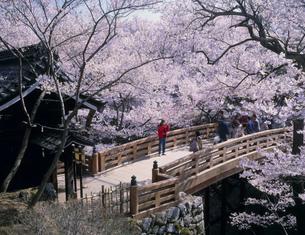 高遠城跡公園の桜の写真素材 [FYI03994691]