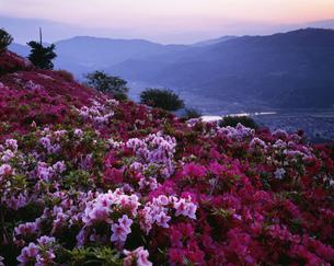 つつじ咲く富士山の夕景の写真素材 [FYI03994718]