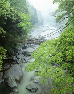 新緑のかずら橋の写真素材 [FYI03994720]